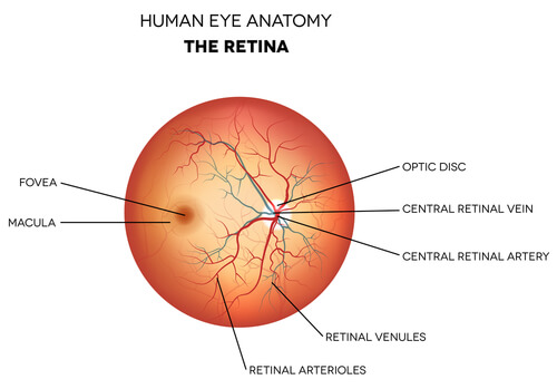 retina doctor chevy chase
